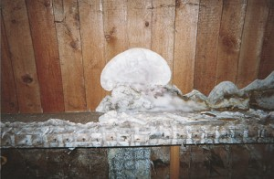 Le traitement de la m rule champignon dans la maison - Champignon de maison merule ...