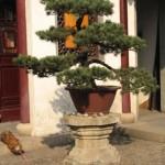 Avoir un Jardin Japonais