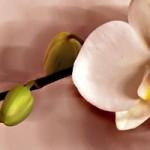 Embellissez votre jardin avec des orchidées