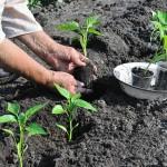Des astuces pour réussir votre jardin