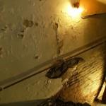 Humidité dans la maison : quelles solutions ?