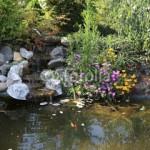 Japonisez votre jardin avec la Carpe Koi