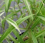 Vacances : Vous avez pensé à vos plantes ?