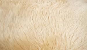 goat-hair-612872_640