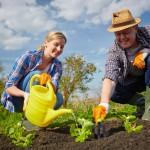 Trois raisons de faire appel à jardinier