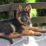 Comment organiser l'arrivée d'un chien à la maison ?