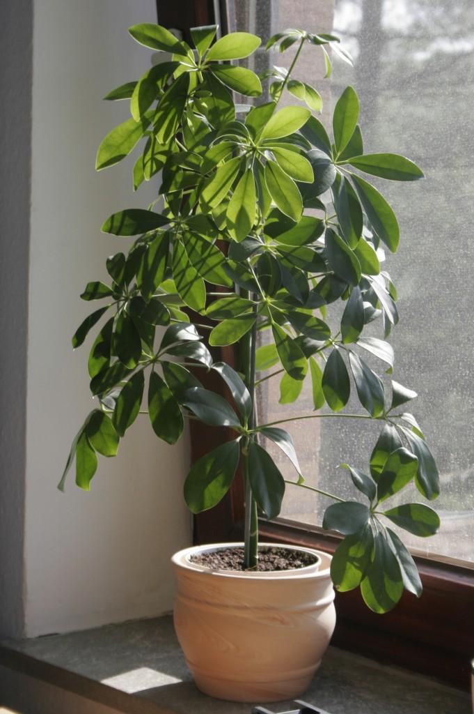 Comment prendre soin de ses plantes d 39 int rieur for Nettoyer feuilles plantes