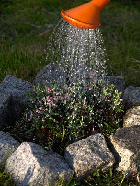 L'arrosage, une étape indispensable pour le bien-être des plantes