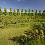 Les bases du jardin écologique