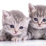 Répulsif chats et propreté de l'animal