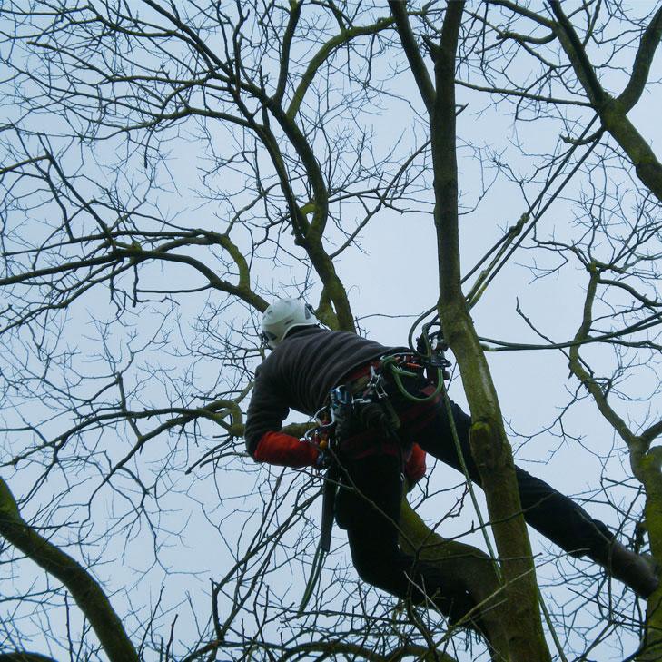 Élagage et abattage d'arbres à Lille