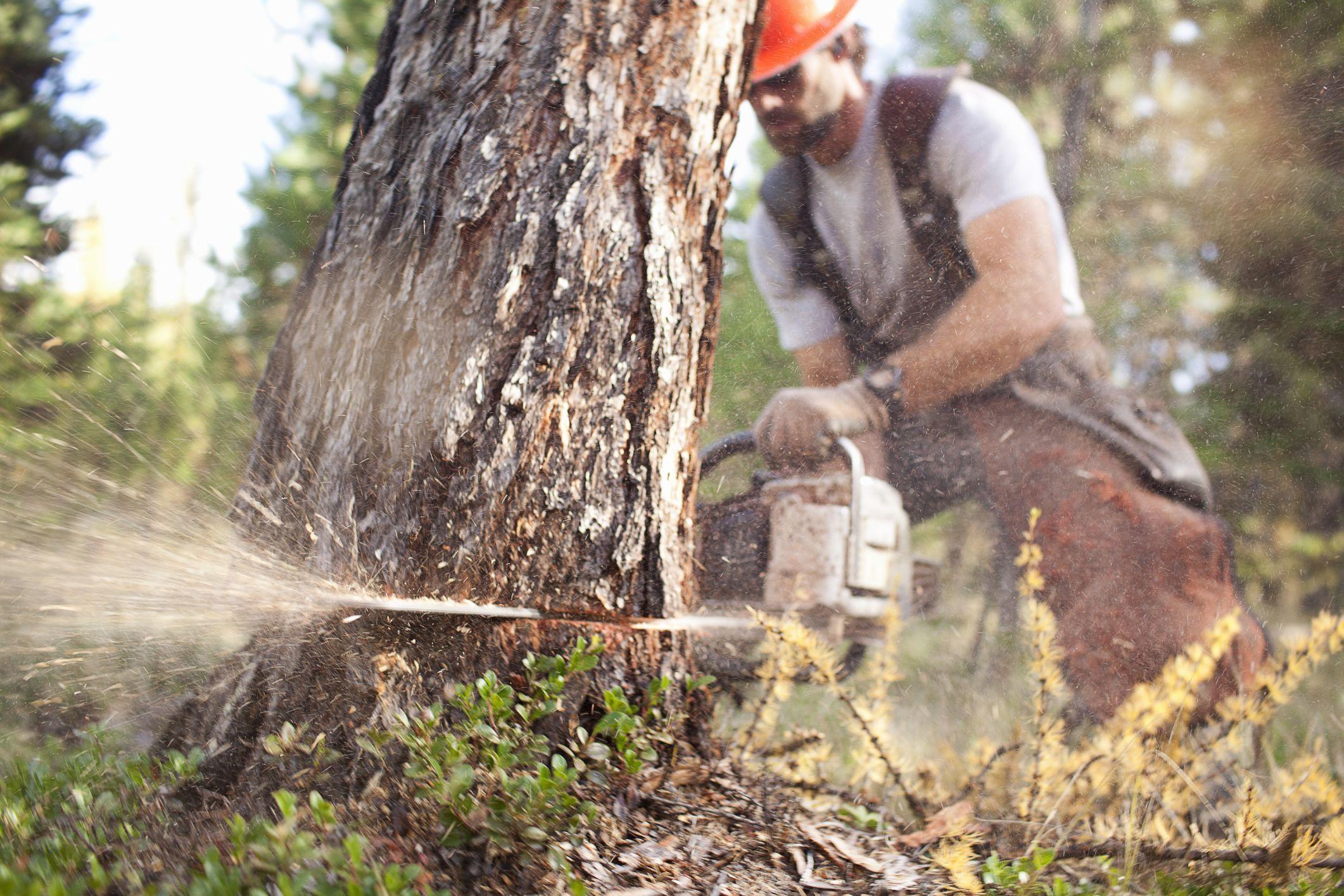 Tarif abattage d'arbre : quels sont les prix ?