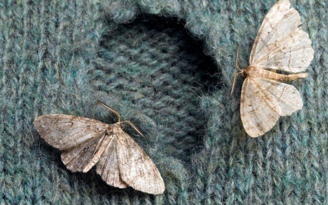 Préserver sa garde-robe d'une infestation de mites