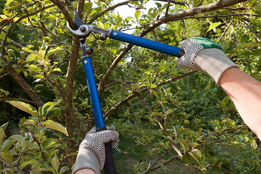 Entretenir ses arbres : 5 conseils pour des arbres en bonne santé