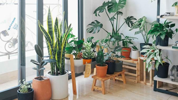 Les 5 conseils pour créer un étonnant jardin intérieur